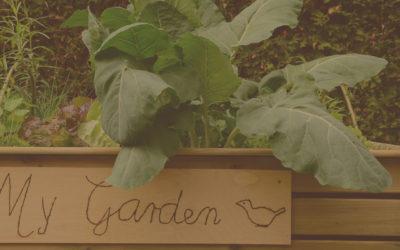 garden-starter-kits